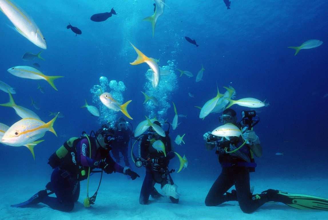 diving cuba