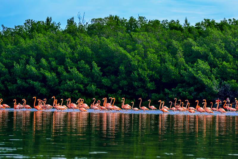 Laguna Guanaroca